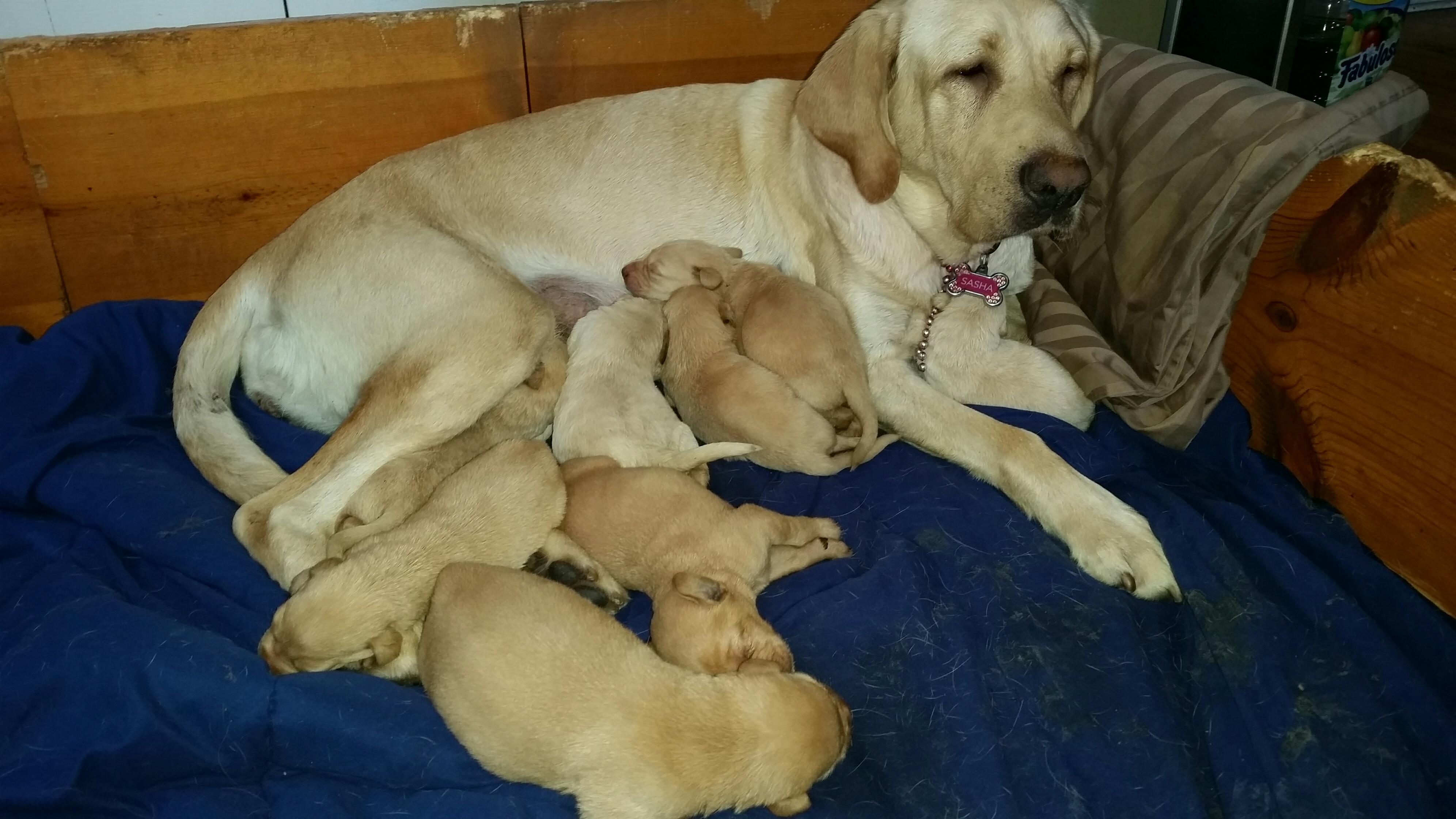 Sasha with her newborn litter